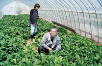 ほうれん草の土耕ハウス栽培
